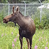 Alaska_CP_25June16_015