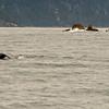 Alaska_16Aug16_123_e
