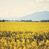 Montana_26June16_015_vintagespring