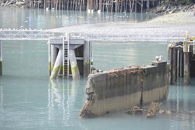 Day 79 - Seward Sealife Center - Sept 6 ,2016