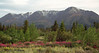 Mtns & fireweed above Lake Kluane.