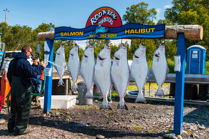Good day for Halibut fishing