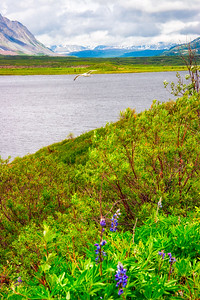 Tangle lakes - Denali highway