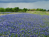 Bluebonnets - Entrance to Copper Breaks SP.