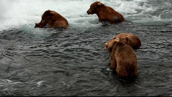 Video taken at Brooks Lodge at Katmai