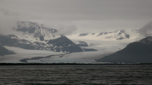 Bear Glacier ends in a lagoon just back from the ocean.