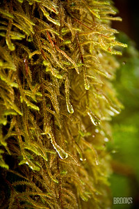 wet moss on a tree, Sitka, Alaska