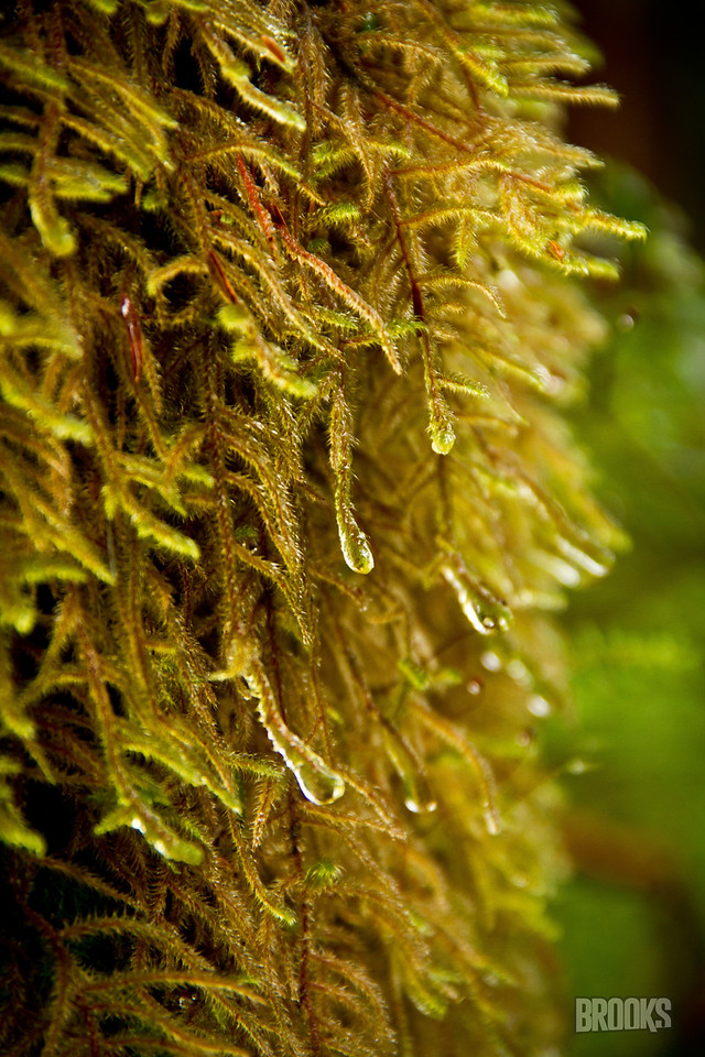 wet moss on a tree, Sitka, Alaska