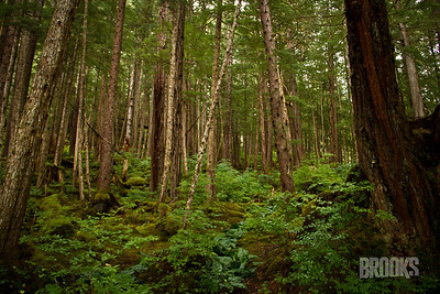rainforest, Sitka Alaska