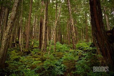 rainforest, Sitka Alaska