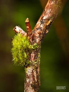 moss on a tree branch, Sitka, Alaska