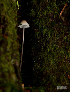tiny mushroom nestled in a tree