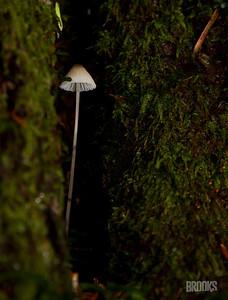 tiny mushroom nestled in a tree