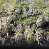 Due to permafrost, trees have very shallow roots. Permafrost is defined on the basis of temperature, as soil or rock that remains below 0°C throughout the year, and forms when the ground cools sufficiently in winter to produce a frozen layer that persists throughout the following summer.