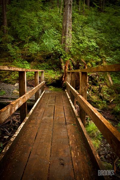 wooden bridge in the rainforest, Sitka Alaska