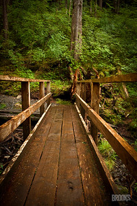 wooden bridge in the rainforest, Sitka Alaska