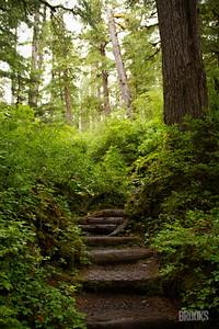 Rainforest in Sitka, Alaska