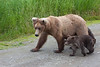 As we walked back to the plane we encountered this mama and three cubs. Fortunately, we were up on the platform and in no danger.