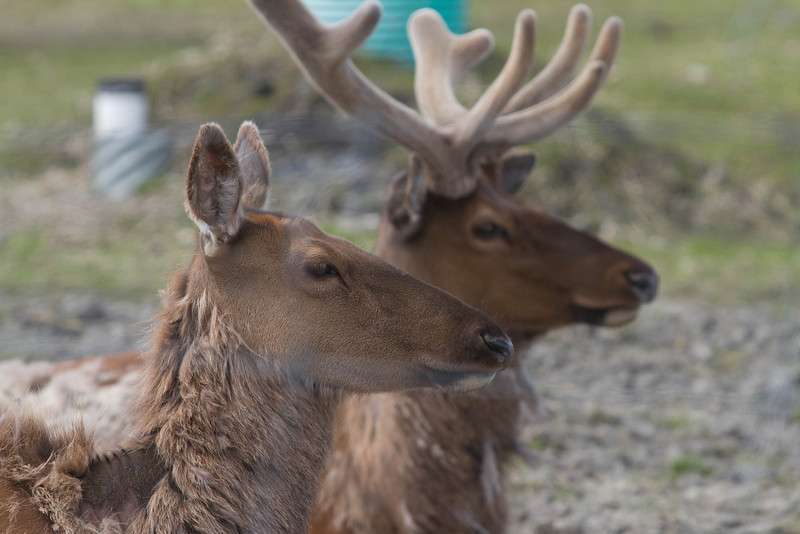 Alaska 2012 1-103