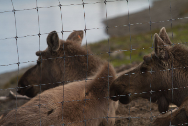 Alaska 2012 1-85