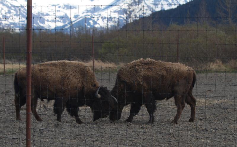 Alaska 2012 1-89