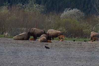 Alaska 2012 1-97