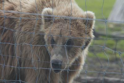 Alaska 2012 1-106