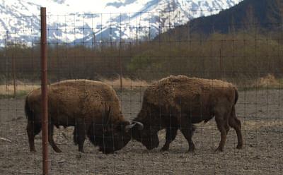Alaska 2012 1-90