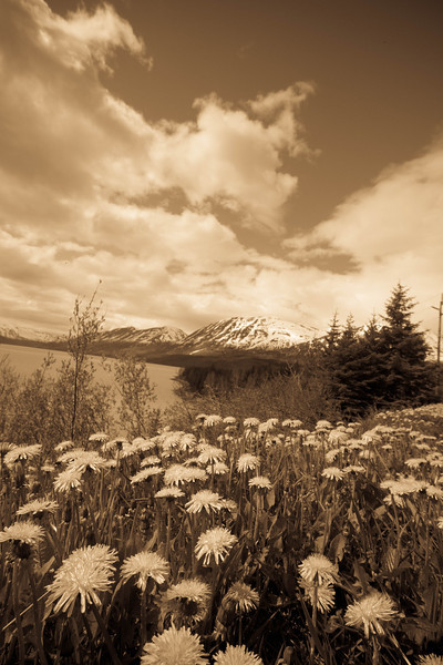 Alaska 2012 1-113