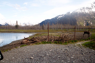Alaska 2012 1-83