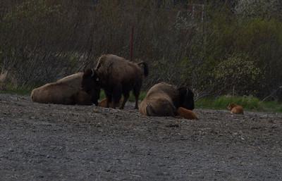 Alaska 2012 1-98