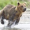 2013_07_24_Bears_0222