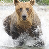 2013_07_24_Bears_0260