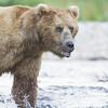 2013_07_24_Bears_0078