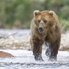 2013_07_24_Bears_0071