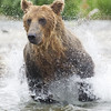 2013_07_24_Bears_0230