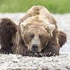 2013_07_24_Bears_0283