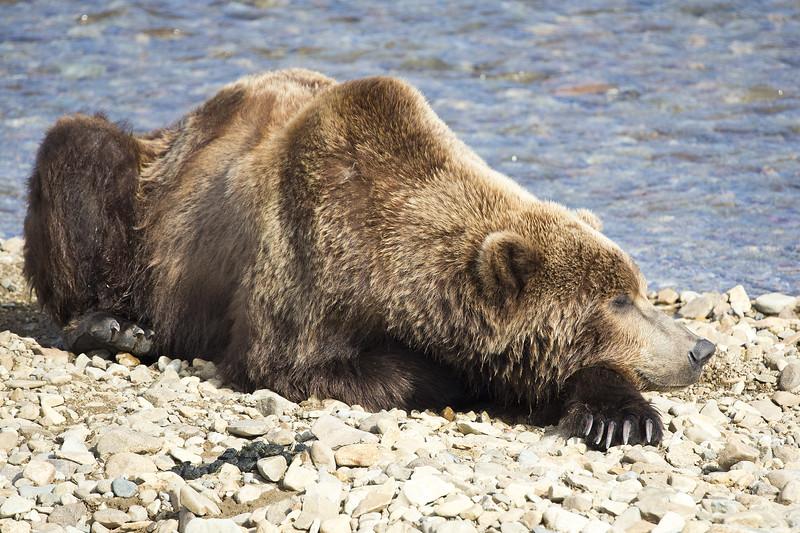 2013_07_24_Bears_0309