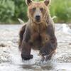 2013_07_24_Bears_0155