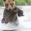 2013_07_24_Bears_0172