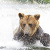 2013_07_24_Bears_0263