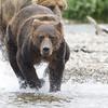 2013_07_24_Bears_0031