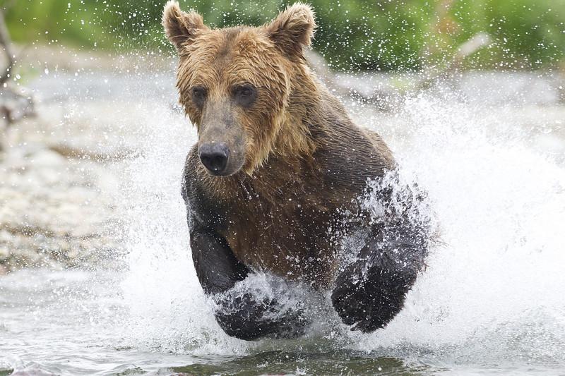 2013_07_24_Bears_0231