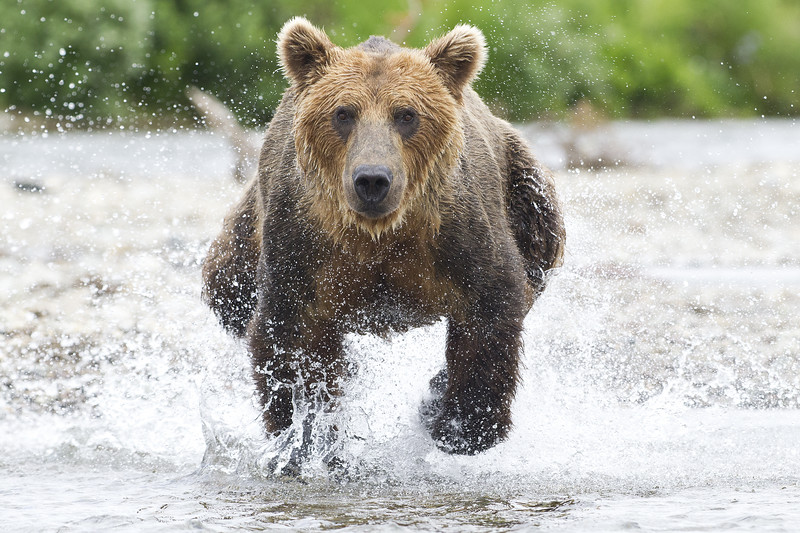 2013_07_24_Bears_0010