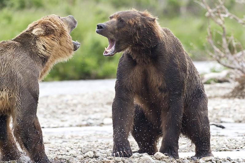 2013_07_24_Bears_0022