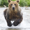 2013_07_24_Bears_0011