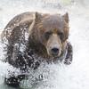 2013_07_24_Bears_0039