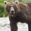 2013_07_24_Bears_0103