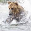 2013_07_24_Bears_0215