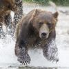 2013_07_24_Bears_0037